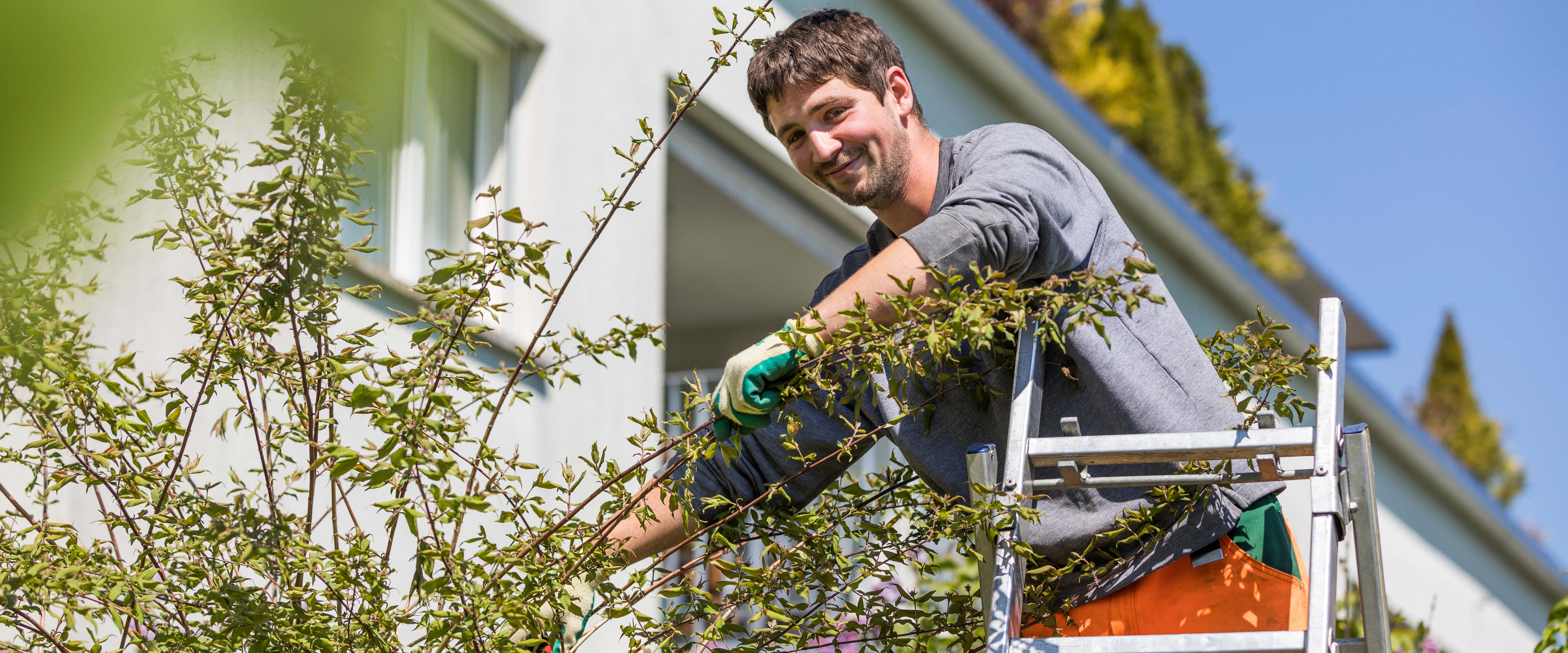 Sträucher- und Baumpflege