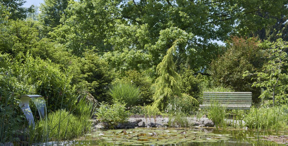 Naturnahes Gewässer Zell